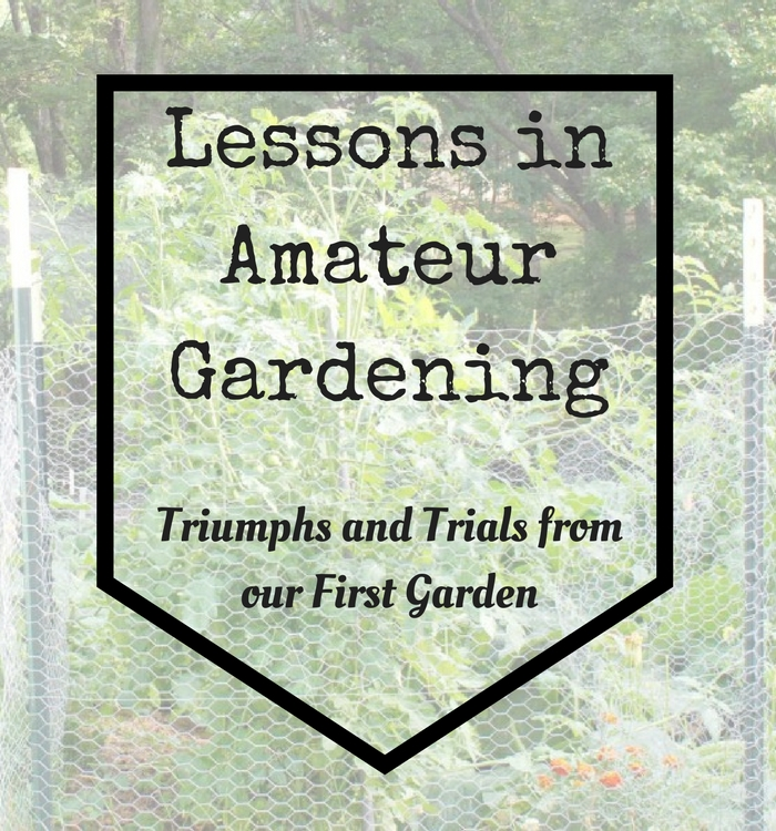 Gardening is something I have always wanted to do. In my first season I came across many trials and triumphs. Here are my lessons in amateur gardening!